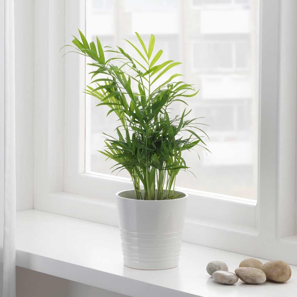 10 biljaka za apartmane u kojima nema puno prirodne svjetlosti