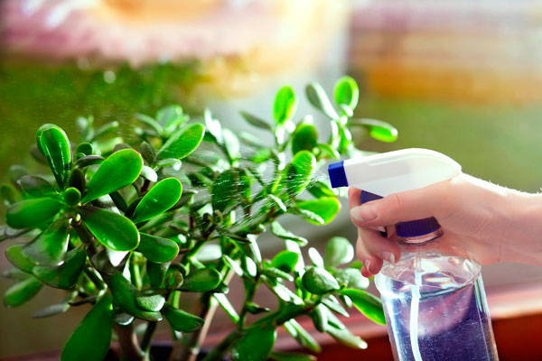 Kako sačuvati biljke pri selidbi?