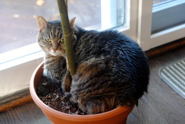 Kako pripremiti biljke za selidbu?
