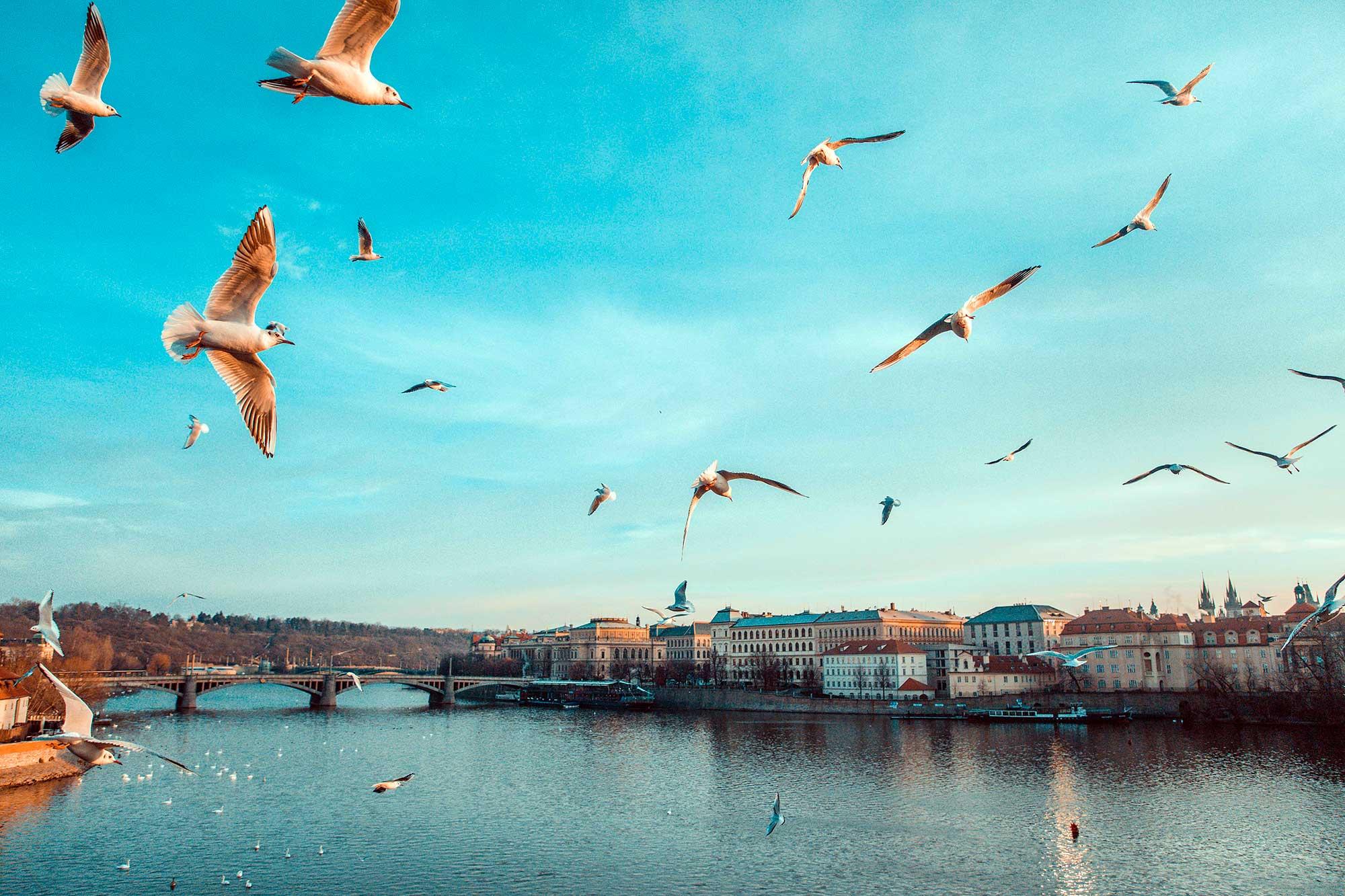 Ograničenja putovanja po zemljama Češka