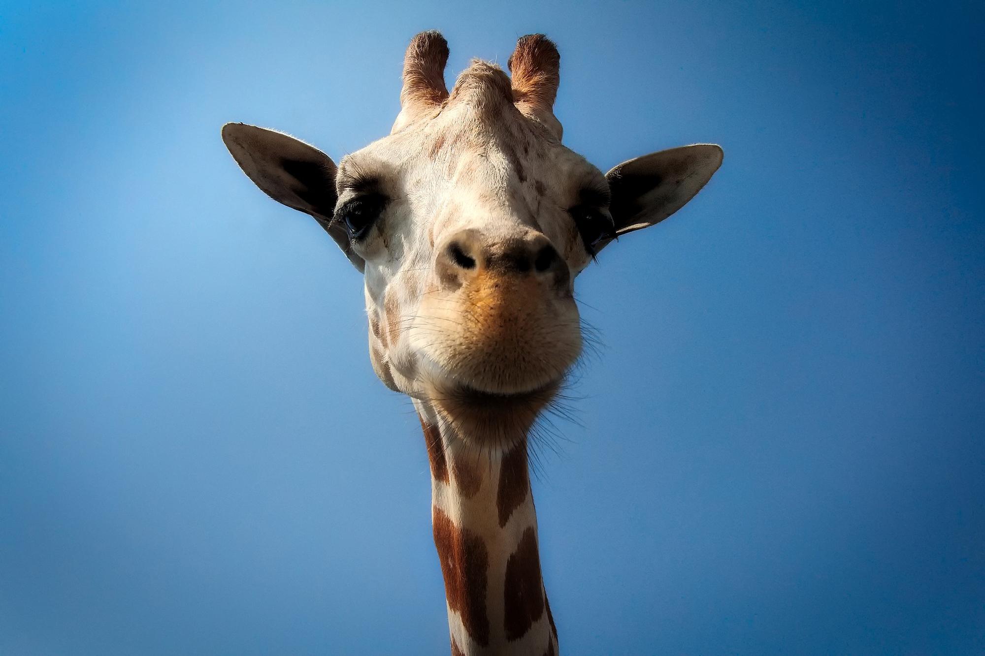 Pravila i preporuke za boravak gostiju s kućnim ljubimcima žirafa