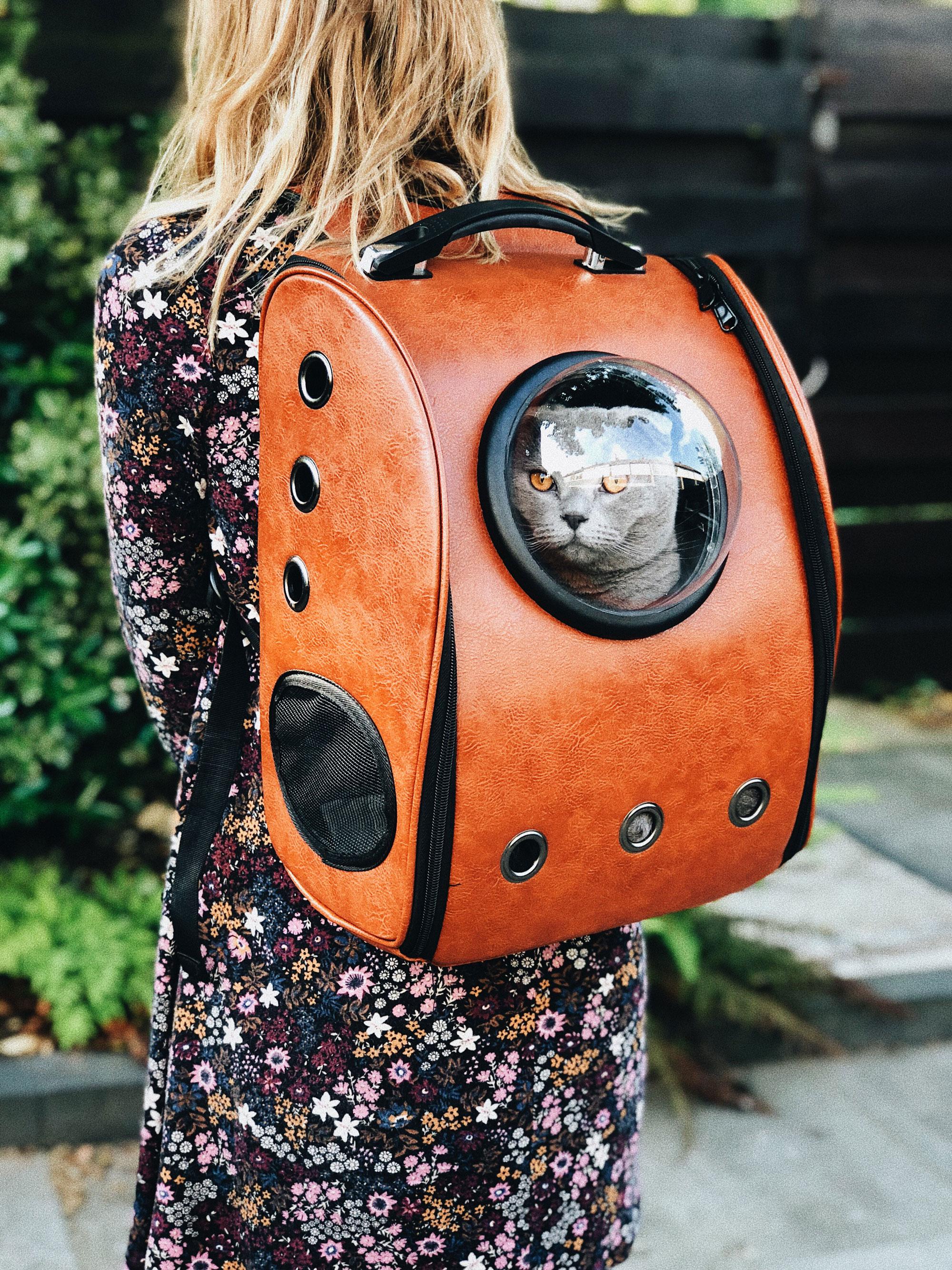 Pravila i preporuke za boravak gostiju s kućnim ljubimcima torba za mace