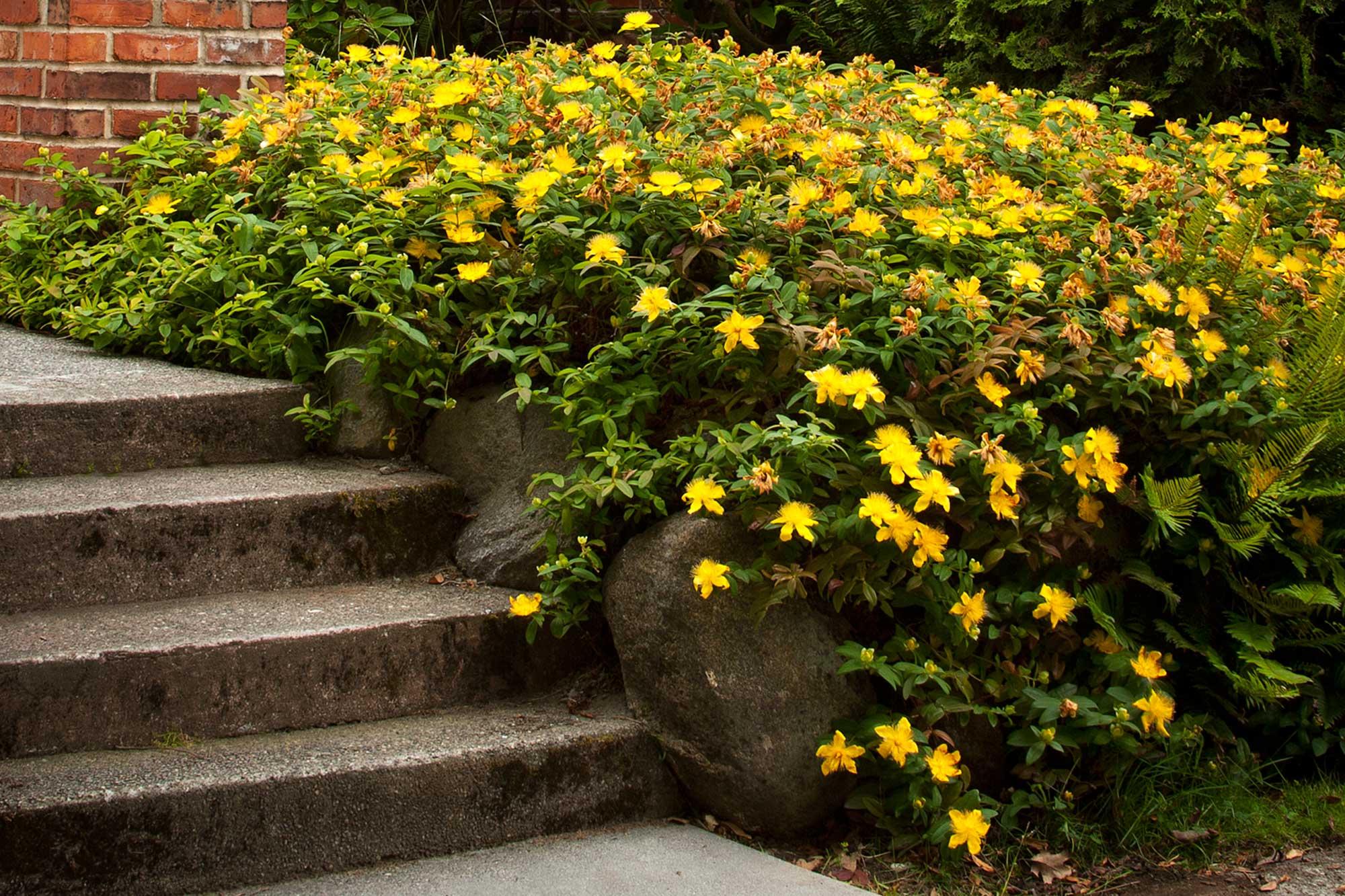 Planiranje vrta: Priprema za proljetno uređenje okućnice smještajnog objekta - pljuskavica