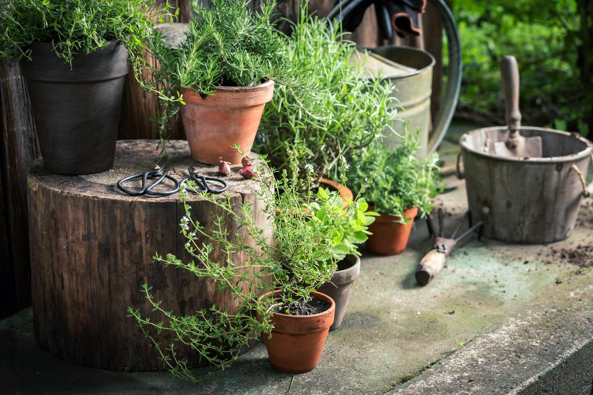 Planiranje vrta: Priprema za proljetno uređenje okućnice smještajnog objekta