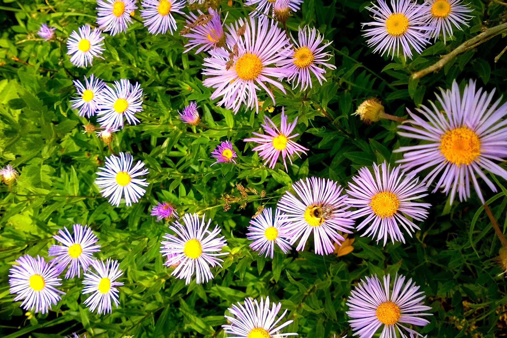 Planiranje vrta: Priprema za proljetno uređenje okućnice smještajnog objekta - zvjezdani