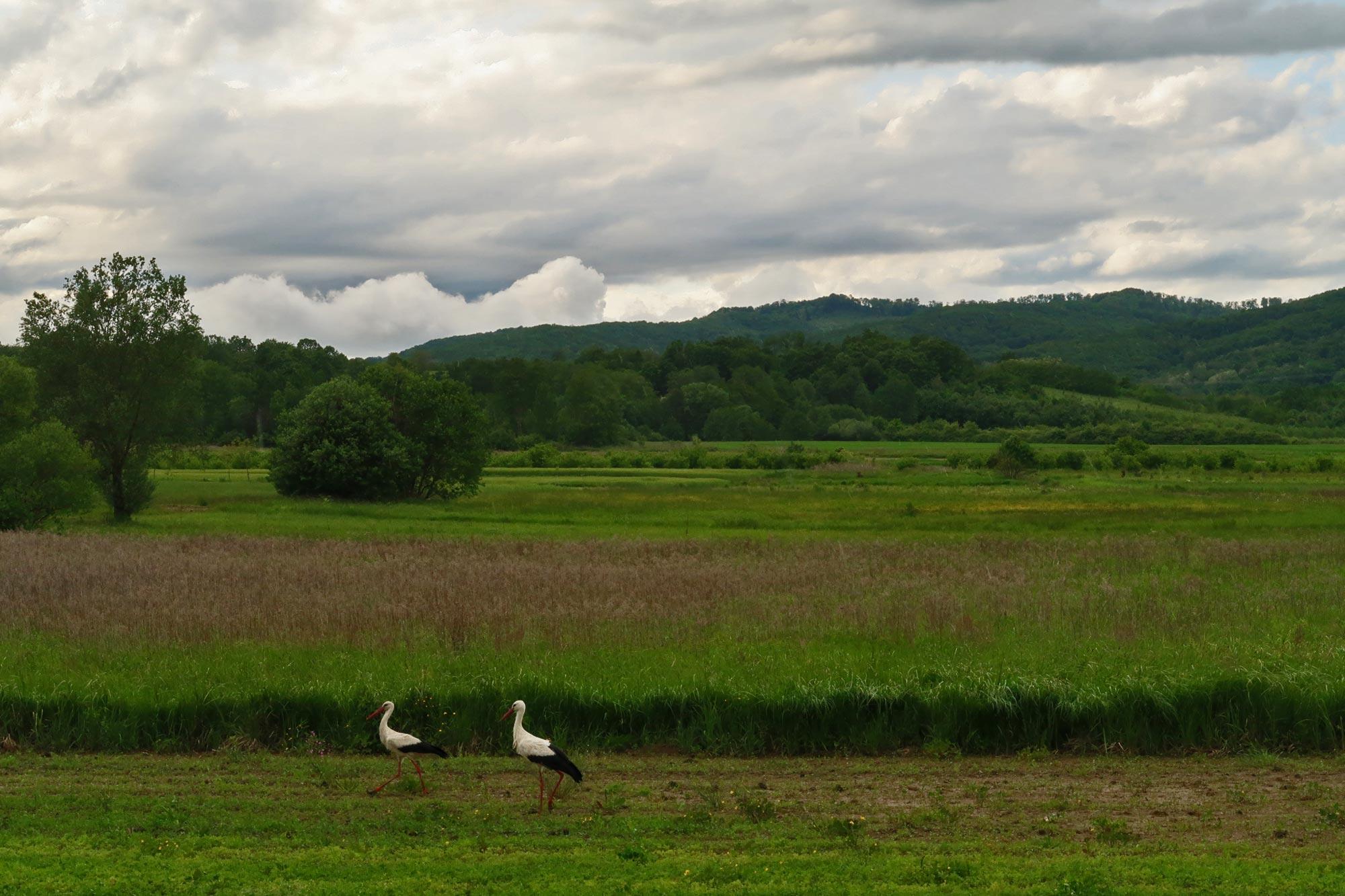 Rode na polju oko Požege