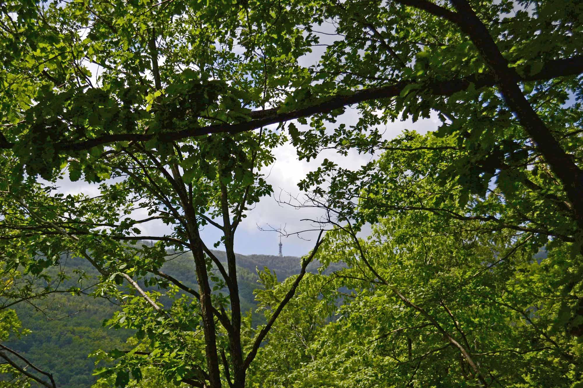 4. korak za čuvanje života na našem planetu: Pogled na Sljeme iz šume